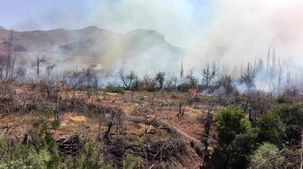 درختان داراباد تهران گرفتار آتش شدند