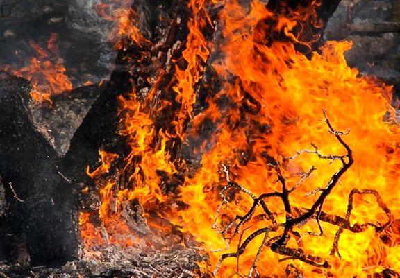 آتش سوزی جنگلهای پره سر گیلان مهار شد/ عامل آتش سوزی جنگل شناسایی شد