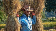 ورود برنج به بورس کالا و ترسیم آیندهای روشن برای کشاورزان