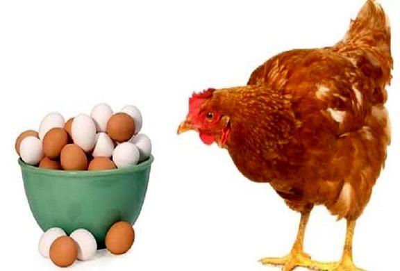کاهش قیمت تخممرغ با بسته بندی!/ قاچاق تخممرغ از مرز چزابه به عراق