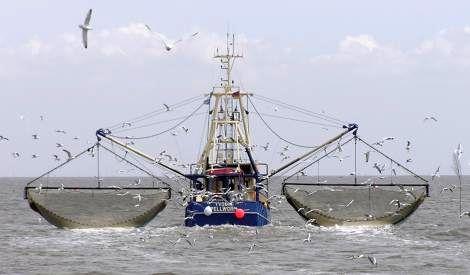 کشتی های چینی پدر صیادان بومی را درآوردهاند