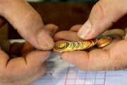 کاهش بیش از 600 هزار تومانی قیمت سکه در بازار امروز