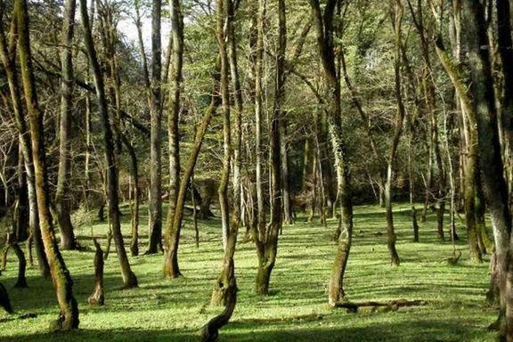 تمام پارکهای جنگلی تعطیل شدند