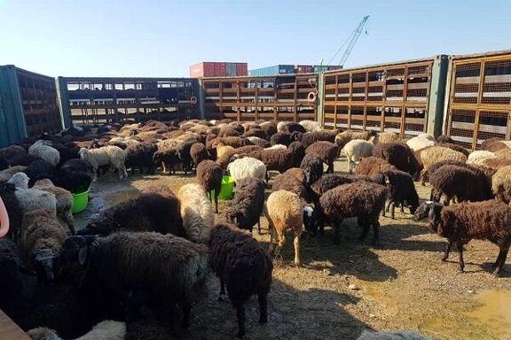 هرگونه ذبح گوسفند در تهران به دلیل شیوع کرونا ممنوع اعلام شد