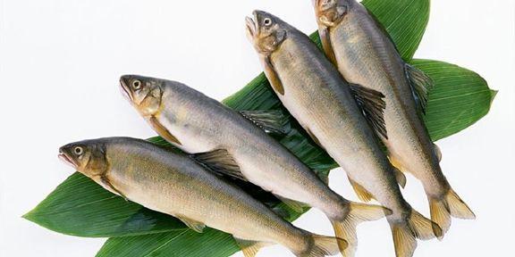 لیست قیمت انواع ماهی در بازار+ جدول