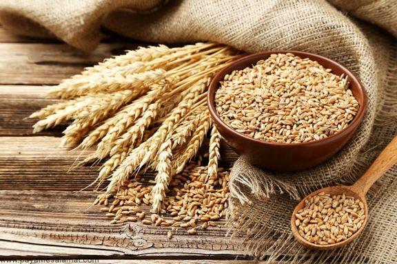 خرید تضمینی بیش از 3.5 میلیون تن گندم در فصل بهار از گندمکاران/ استان خوزستان و گلستان در صدر