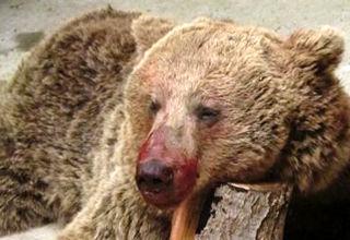 گفتگو با بانوی سوادکوهی مشهور در ماجرای قتل خرس