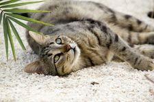 یک گربه در بلژیک به کرونا مبتلا شد