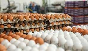 نزدیک به ١٠ هزار تن تخم مرغ تا 26 روز گذشته از کشور صادر شده است