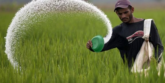 افزایش بیحد و اندازه نرخ کود پذیرفتنی نیست/ مسیر اشتباه دولت در سیاستهای بخش کشاورزی