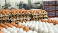 توزیع و عرضه تخم مرغ شانهای ۳۴۰۰۰ تومانی آغاز شد