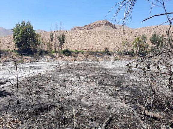 دو باغ در ابیانه کاشان در آتش سوخت