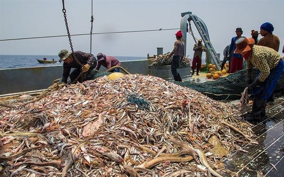 ماهیگیری چینی ها در دریای عمان رسما تأیید شد / معاون سازمان بنادر و دریانوردی: چینی ها قرارداد بلندمدت با شیلات کشورمان دارند