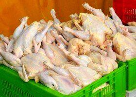 افزایش قیمت مرغ در بازار/ هر کیلو ۱۲ هزار و ۹۰۰ تومان