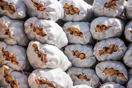 صادرات سیب زمینی ممنوع نمی شود مشمول تعرفه می شود
