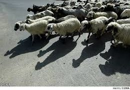 اعتراض دامداران یکی از روستاهای استان یزد بههمراه گوسفندانشان در جهاد کشاورزی