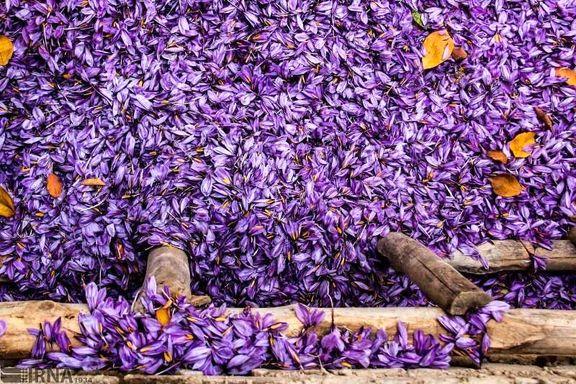 ایران بیش از 78 میلیون دلار زعفران صادر کرد
