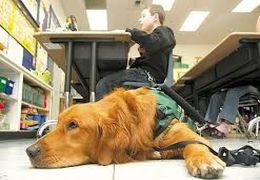 کمک یک سگ به صاحبش که دچار حمله اوتیسم شده است + فیلم