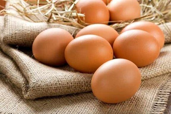هر شهروند ایرانی در 365 روز 200 تخم مرغ مصرف می کند