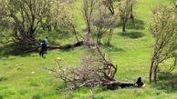 مأموران منابع طبیعی با راننده نیسان درگیر شدند