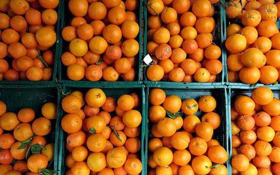 کاهش ۳۰ درصدی تولید پرتقال/ هویج روی دست بارفروشان ماند