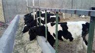 درآمد زدشت 711 میلیون تومان کاهش یافت / مقدار فروش شیر خام افت کرد