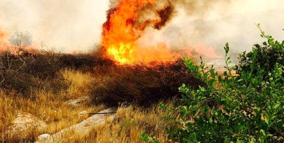 آتشسوزی یک هکتاری باغ زیتون در رودبار