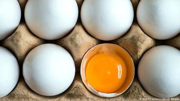 عوارض صادراتی تخم مرغ در ماه جاری حذف شد اما به یک شرط