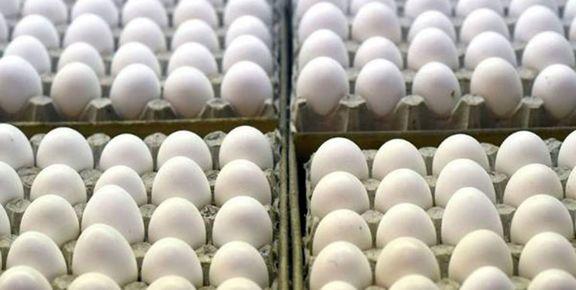 تخم مرغ گران شد / علت افزایش آن چیست؟
