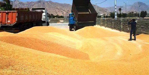 قیمت جهانی گندم 2.25 دلار کاهش یافت