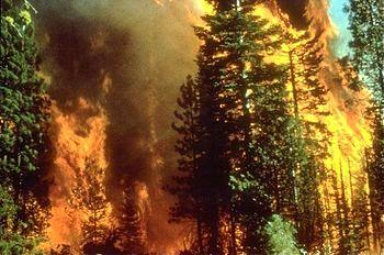 آتش سوزی در جنگل های نیوزلند
