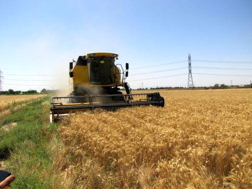 سنگ اندازی عجیب گمرک در مسیر صادرات محصولات کشاورزی
