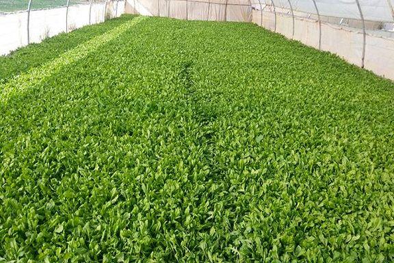 تولید بذر طبق هدف گذاری در سال جاری 35 درصد افزایش می یابد