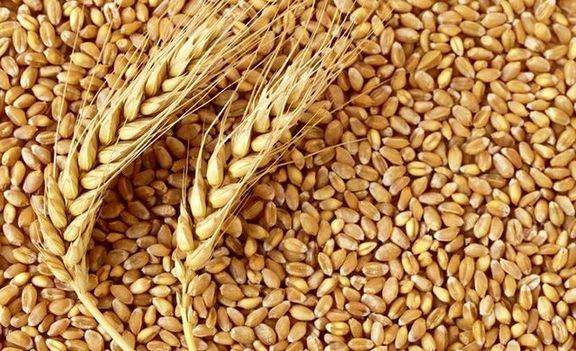 عدم کمبود گندم در سال جاری
