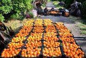 باغداران حق صادرات سیب و پرتقال شب عید را تا 15 فروردین ندارند