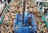 تخلیه ٥٠ هزار راس دام از کشتی در بندر چابهار آغاز شد/تا پایان سال٩٠ هزار رأس دام زنده وارد کشور میشود