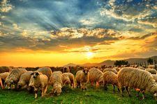 وضعیت شرکتهای کشاورزی و دامپروری برای خرید چگونه است؟