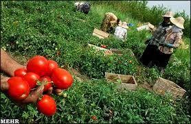 تنظیم بازار بر روی خرید محصولات کشاورزی تاثیری ندارد