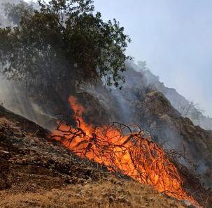 بیش از ۱۰۰ هکتار از جنگل های دیل طعمه حریق شد