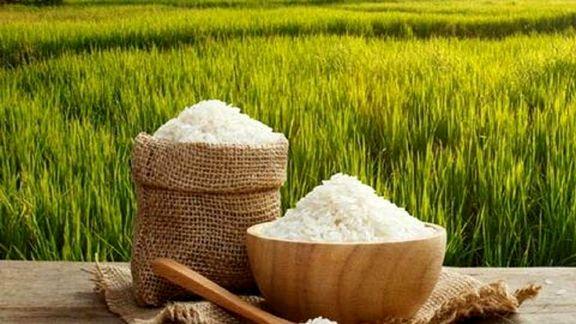 فقط ۱۵ میلیون ایرانی میتوانند به راحتی برنج بخرند