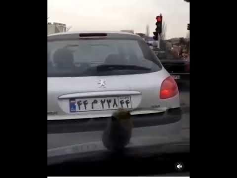 واکنش استانداری تهران به انتشار فیلم بارش بادمجان در نقاطی از پایتخت