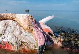 خرید و فروش هرگونه پرنده مهاجر تا اطلاع ثانوی در مازندران ممنوع شد + فیلم