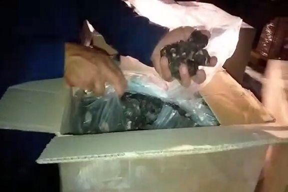 ممانعت گمرک از قاچاق چند میلیون یورویی قارچ سیاه
