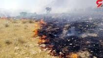 همچنان جنگل های کرمانشاه در حال سوختن هستند و اطفای حریق نشده است