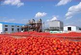 صادرات رب گوجهفرنگی آزاد شد