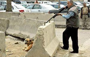 ماجرای سگ کشی  در آرادکوه چیست؟