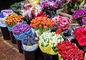 قیمت هر شاخه گل رز بین ۱۰ تا ۱۲ هزار تومان