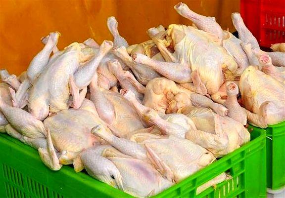 مرغ با رشد ۱۰۵ درصدی در صدر افزایش قیمت ها