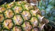 آناناس در میوه فروشی ها با قیمت بیش ازیک میلیون ریال به فروش می رسد
