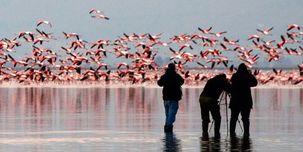 علت مرگ دسته جمعی پرندگان در تالاب میانکاله چه بود؟